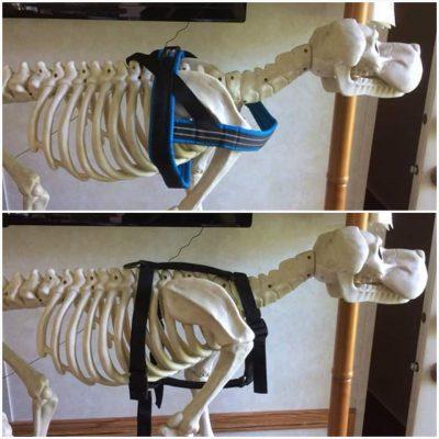 comparision-harness-restrictive-non-restrictive