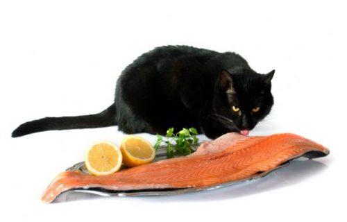 img_por_que_los_gatos_no_pueden_comer_pescado_verdad_o_mito_28329_600